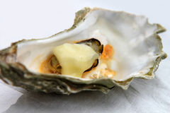 Opened oyster Stock Photos