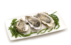 Opened oysters Stock Images