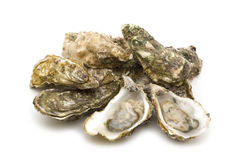 Opened oysters. On white background royalty free stock photography
