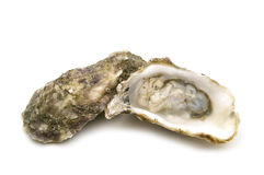 Opened oysters Royalty Free Stock Photo