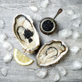Opened oysters with black sturgeon caviar and lemon on ice on grey concrete background. Stock Image
