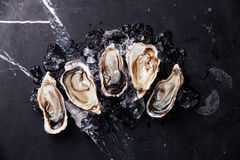 Opened Oysters Royalty Free Stock Images