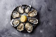 Opened Oysters Fines de Claire Stock Photos