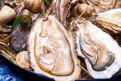 Opened Oysters on folk decorated plate. Close up in restaurant Royalty Free Stock Image