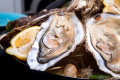 Opened Oysters on folk decorated plate. Close up in restaurant Stock Photography