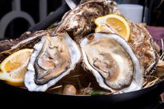 Opened Oysters on folk decorated plate. Close up in restaurant Stock Photo