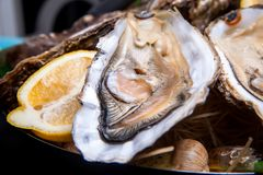 Opened Oysters on folk decorated plate. Close up in restaurant Royalty Free Stock Photography