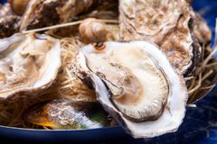Opened Oysters on folk decorated plate. Close up in restaurant Royalty Free Stock Photos