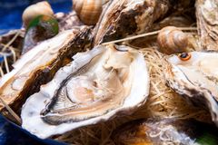 Opened Oysters on folk decorated plate. Close up in restaurant Royalty Free Stock Photo