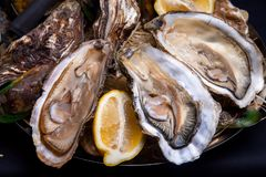 Opened Oysters on folk decorated plate. Close up in restaurant Stock Photos