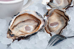 Opened oysters on ice Stock Image