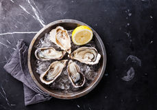 Opened Oysters with ice and lemon. Opened Oysters on metal plate with ice and lemon on dark marble background Stock Images