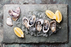 Opened Oysters with ice and lemon Royalty Free Stock Images