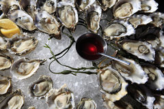 Opened oysters on ice stock images