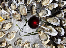 Opened oysters on ice Royalty Free Stock Photo