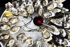 Opened oysters on ice Royalty Free Stock Photography