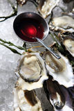 Opened oysters on ice royalty free stock images