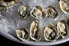 Opened oysters on ice stock photo