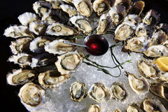 Opened oysters on ice royalty free stock image