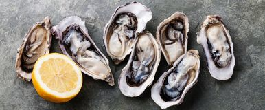Opened Oysters with lemon Stock Photography