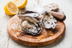 Opened Oysters on olive wood board Stock Images