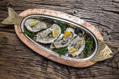 Opened oysters with piece of lemon. Stock Photo