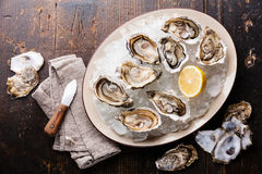 Opened Oysters on plate with ice and lemon Royalty Free Stock Image