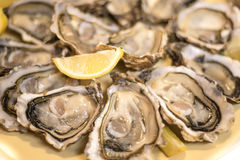 Opened Oysters served with fresh slices of lemon. On a yellow plate Royalty Free Stock Images