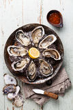 Opened Oysters with spicy sauce and oyster knife Stock Image