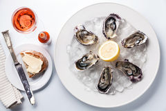 Opened Oysters on white plate royalty free stock image