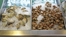 Opened oysters and wing shells on ice for selling royalty free stock photos