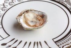Opened raw fresh and juicy oyster served on luxury ceramic plate. In seafood restaurant Royalty Free Stock Photos