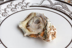 Opened raw fresh and juicy oyster served on luxury ceramic plate. In seafood restaurant Royalty Free Stock Images
