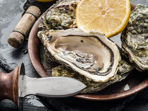Opened raw oysters. Raw oysters on the graphite board Royalty Free Stock Photography