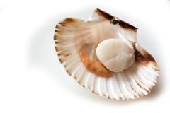 Opened scallop Royalty Free Stock Photography
