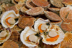 Opened scallops Royalty Free Stock Images