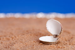 Opened sea shell on beach sand and blue sky Royalty Free Stock Photo