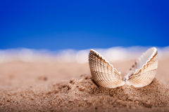 Opened sea shell seashell on beach sand Royalty Free Stock Photo