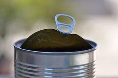 Opened tin can with ring pull. Opened view of tin can with ring pull royalty free stock photos