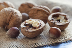 Opened walnut in the foreground. Near several walnuts and hazelnuts. Burlap on a table of black wood. Horizontal shot Stock Photography