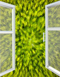 Opened window to the green abstraction Stock Image