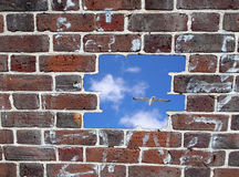 Opening in a brick wall, blue sky and seagull Stock Photos