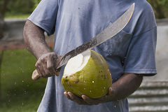 Opening coconut Royalty Free Stock Image