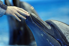 Opening of the dolphinarium Royalty Free Stock Photography