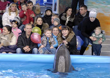 Opening of the dolphinarium Royalty Free Stock Photo
