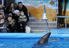 Opening of the dolphinarium Stock Photography