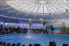 Opening of the dolphinarium Royalty Free Stock Image