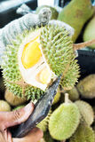 Opening Durian shell by cleaver to see inside. Yellow Durian royalty free stock photo
