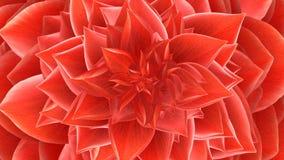 Opening Flower. Loop. 3D Animation