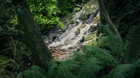 Opening in the forest with small waterfall. Small waterfall seen through a gap in the trees and plants stock video